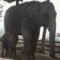 elephant__baby